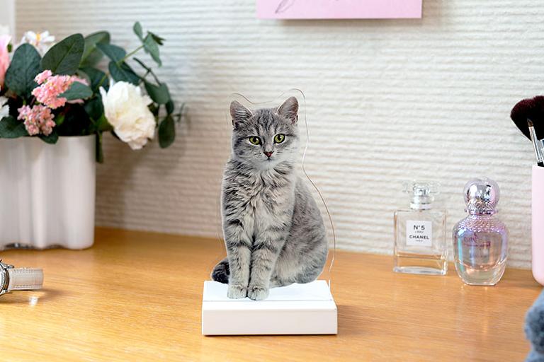 Katzenfoto als Fotofigur